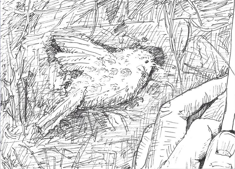Telpost nr. 8, Dood vogeltje in de Halve Bunder, 2017, 14,5x10,5 cm, fineliner op papier