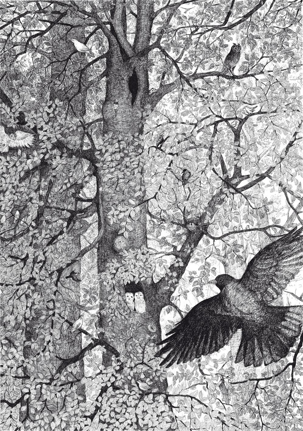 Waar bomen staan die alleen vogels kennen, 2015, 70×100 cm, fineliner op papier