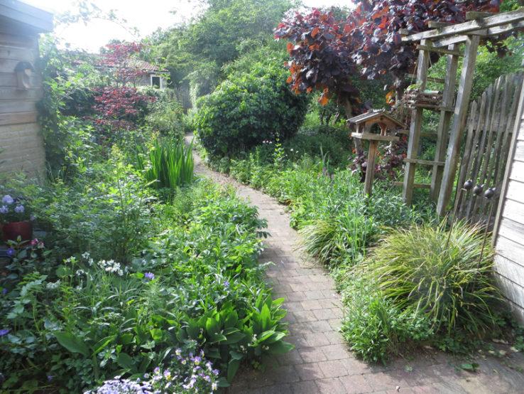Natuurtuin, sinds 2010 onder mijn beheer