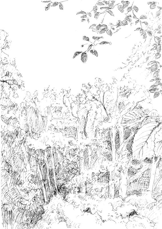 Boszicht, 2018, 14,8x20,7 cm, fineliner op papier