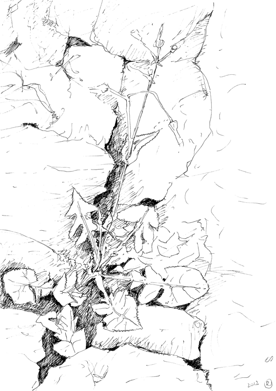 Composiet, Inis Meáin, 2012, 14,8x21 cm, fineliner op papier
