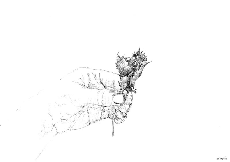 Hand met blad, 2015, 21x29,7, fineliner op papier