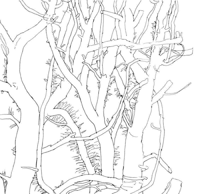 Klimop, 2016, 21,1x20,4 cm, fineliner op papier