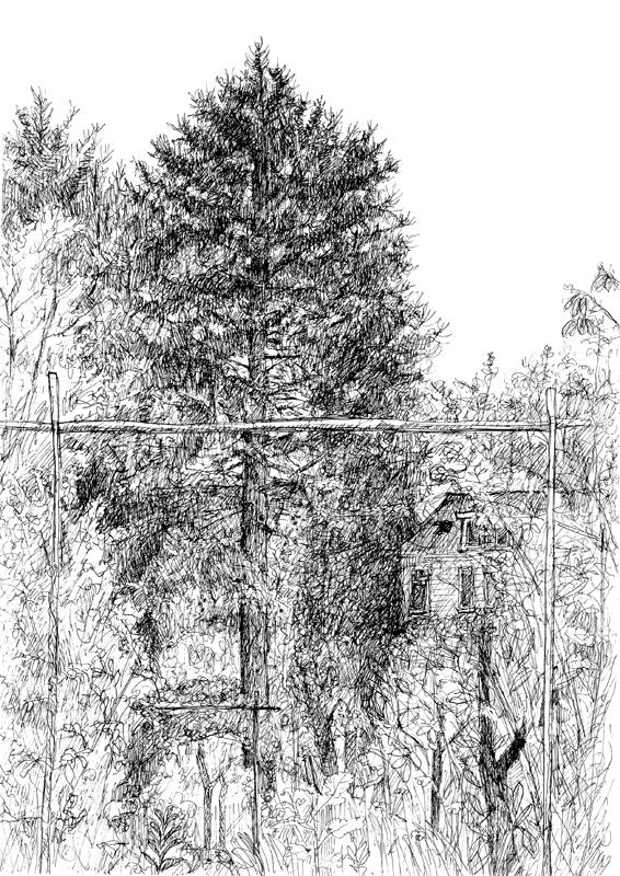 Lariks in de tuin, 2015, 21x29,7 cm, fineliner op papier