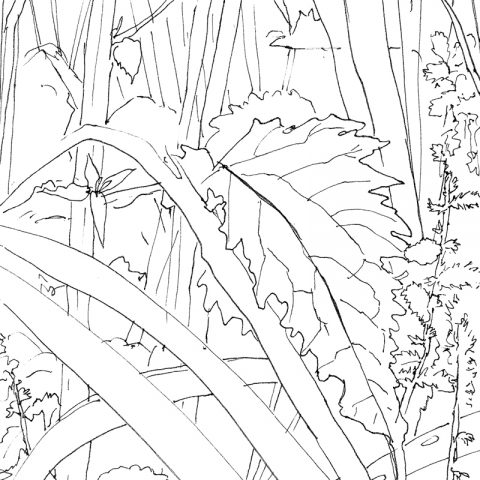 Mijn tuin, 2017, 10,5x14,5 cm, fineliner op papier